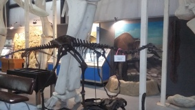 Two Medicine Dinosaur Center