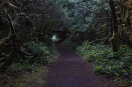 The trail to the beach from Carl Washburn State Park Campground