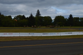 A herd of Elk popped up by the airstrip in Forks while we were looking at Bella's trucks across the street.