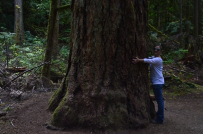 Courtney getting in her tree hug for the day on the Marymere Falls Trail in Olympic National Park.