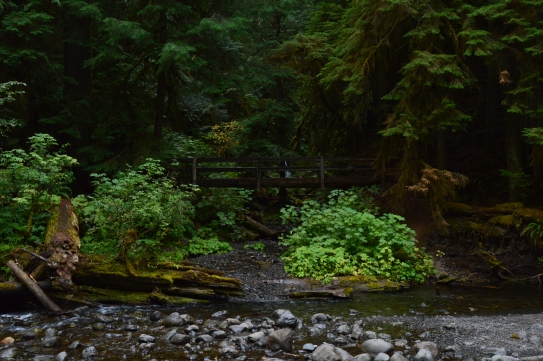 A beatiful stroll through an ancient forest on the Marymere Falls Trail in Olympic National Park