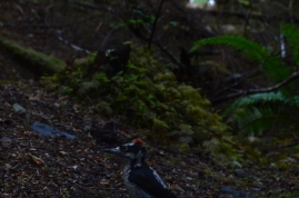 A woodpecker we made friends with in Olympic National Park.