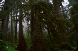 Sol Duc Rain Forest in Olympic National Park.