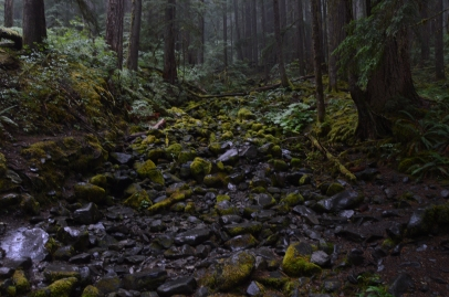 Sol Duc Falls Trail, Olympic National Forest
