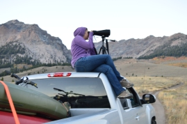 Looking for wildlife in Sawtooth National Forest