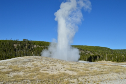 Old Faithful erupting, right on time, at Upper Geyser Basin in Yellowstone National Park.