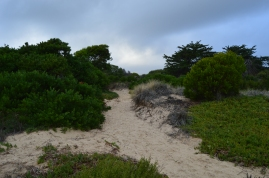 A sandy walk through a fragrent forest to Pismo Beach, CA