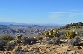 A view from the top of Ryan Mountain in Joshua Tree National Park