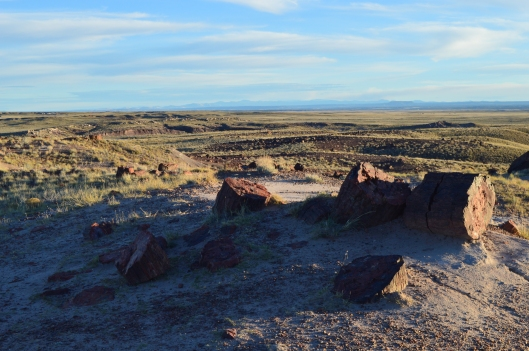 Petrified Wood in the Petrified Forest National Park, AZ