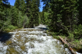 Cascade Creek raging during the spring runoff, Monarch Lake Trail, Arapaho National Rec Area