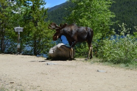 Ran into this big guy at the trail head for Monarch Lake, Arapaho National Rec Area