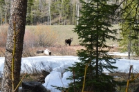 We ran into this sweet girl on the Fraser River Trail, Winter Park, CO