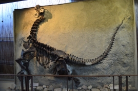 A cast of a Camarasaurus at the Quarry Exhibit Hall in Dinosaur National Monument