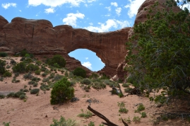 I can't believe how much rich greenness is found in this rocky hot climate. Arches National Park, Moab, UT