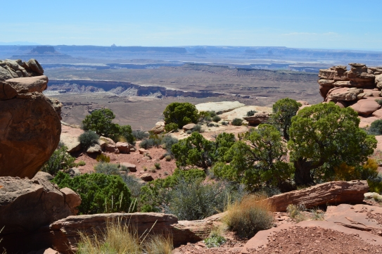 So much green and so many canyons. Canyonlands National Park